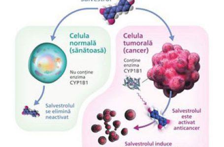 Tratarea cancerului și moartea celulelor canceroase prin mecanismul CYP1B1-Salvestrol