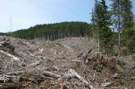 Comisia Europeană răspunde la interpelarea eurodeputatei Carmen Avram cu privire la defrișările masive de păduri din România
