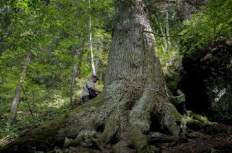 România a câștigat un loc onorabil  în cadrul competiției Arborele European al Anului 2020