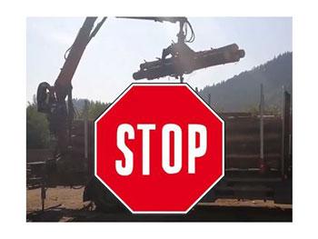 Senatul a adoptat proiectul care interzice scoaterea masei lemnoase din țară