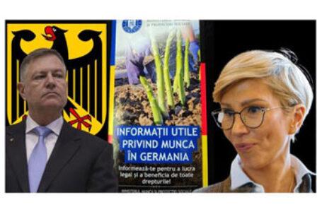 Spar-Hanghelul Iohannis trimite românii la cules de sparaghel în Germania